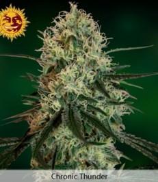 Graine de cannabis Chronic Thunder de chez Barney's Farm Seeds