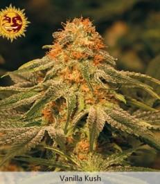 Graine de cannabis Vanilla Kush de chez Barney's Farm Seeds