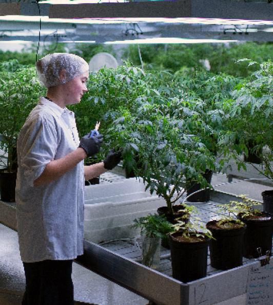 comment-faire-une-bouture-de-cannabis-cut-par-employee