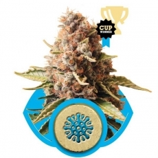 Graine de cannabis Euphoria de chez Royal Queen Seeds