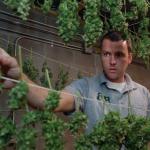 Comment faire pousser du cannabis : les secrets des PROS dévoilés !