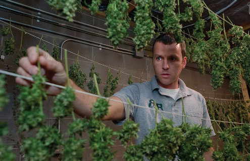 Comment faire pousser du cannabis