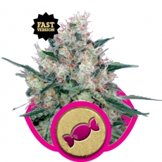 Graine de cannabis Royal Caramel de chez Royal Queen Seeds
