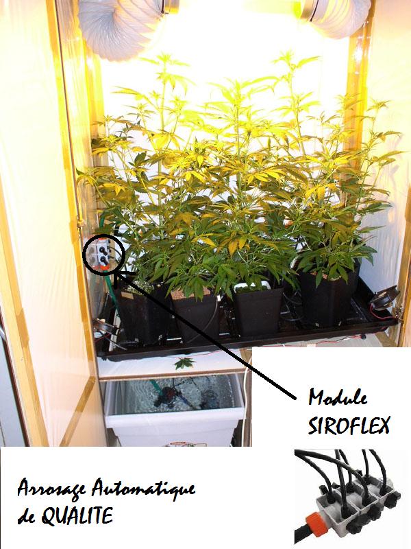 Comment-cultiver-du-cannabis-arrosage-automatique-module-SIROFLEX