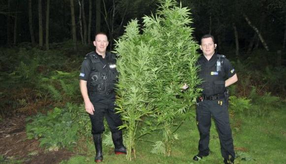Comment-cultiver-du-cannabis-sans-arrosage