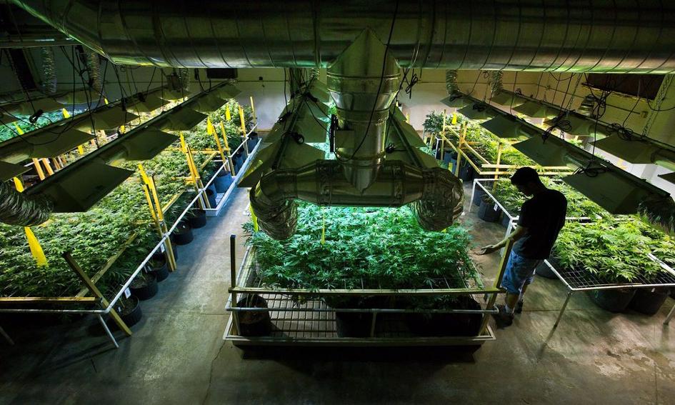 extracteur-d-air-silencieux-exemple-de-chambre-de-culture-de-cannabis