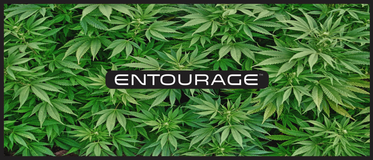 e-liquide-cannabis-entourage-intro.