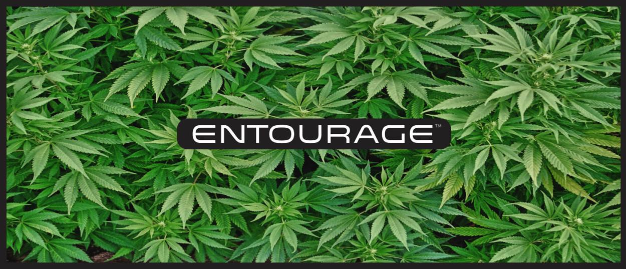 e-liquide-cannabis-entourage-intro.