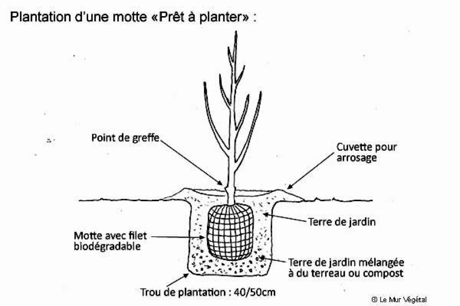 culture de cannabis en extérieur schema-plantation-d-une-motte