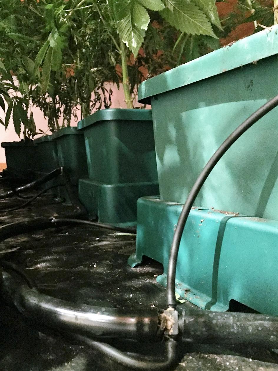 culture-de-cannabis-en-interieur-module-autopot-utilisable-en-hydroponie-et-terreau